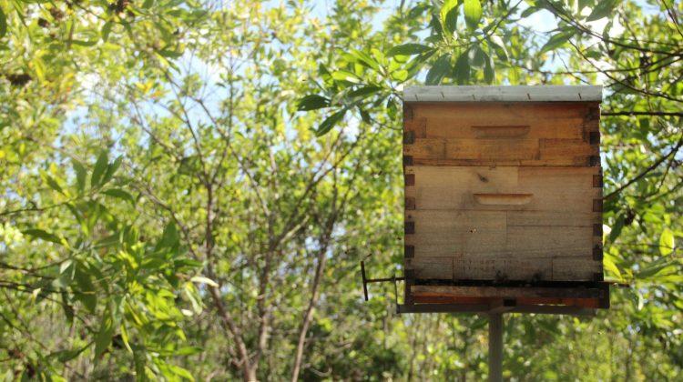 Jornal da Record visita nossa produção de mel na Serra do Roncador